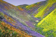 uttarakhand-Valley-of-Flowers