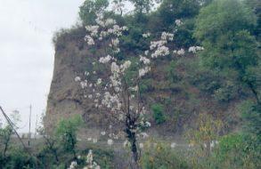 Uttarakhand Family Trip(14)
