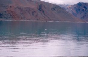 Wilderness vacations in Ladakh(5)