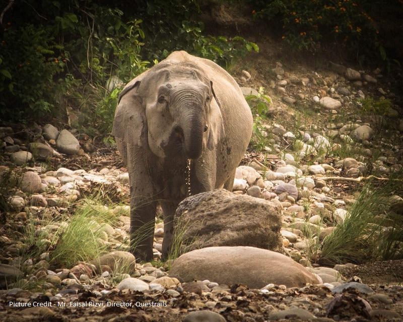 corbett tiger reserve Jhirna zone