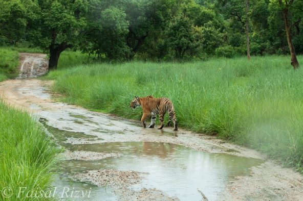 Corbett tiger reserve, Jhirna zone