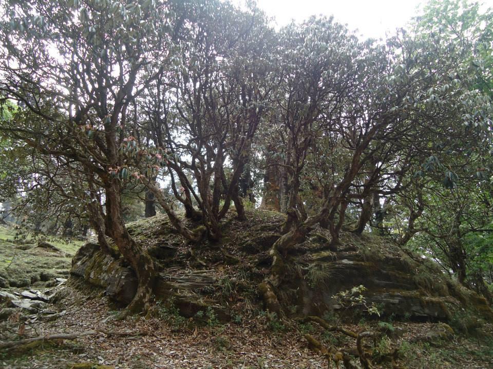 chopta-tungnath-trek-169